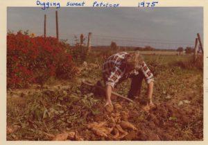 the harrow and the harvest