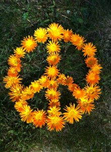 calendula peace sign